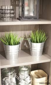 plante de cuisine étagère de cuisine plante verte buy this stock photo and explore