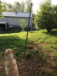 Is It Legal To Bury Your Dog In The Backyard - how to make the best dog toy for your playful dog snapguide