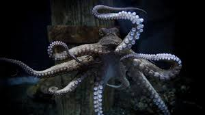 picture taking octopus