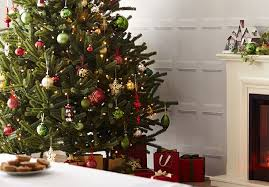 how to care for your christmas tree at homebase co uk