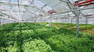 this startup operates 4 huge farms in new york and chicago