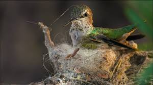 animal homes episode 1 the nest nature pbs