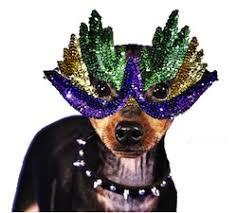 mardi gras dog krewe of barkus mardi gras has to the dogs animal fair