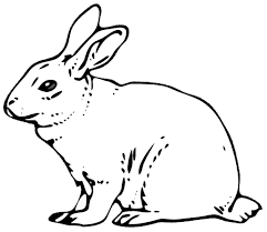 rabbit coloring pages coloringsuite com