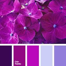purple orchids color of purple orchids color palette ideas