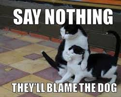 Silly Cat Memes - 15 top feb 2018 hilarious cat memes page 3 of 3 quoteshumor com