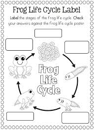 life cycle of a frog coloring page crafts and worksheets for