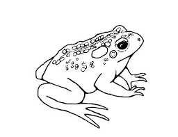 295 coloring pages images drawings animals