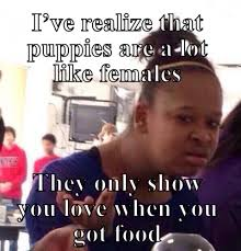 Females Be Like Meme - ive realize that puppies are a lot like females they only show you