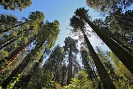 arnold california vacation rentals big tree california vacation