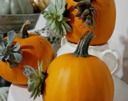 pumpkin succulent centerpiece diy video tutorial oh you u0027re lovely