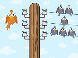 why don u0027t birds on a wire get a shock pitara kids network