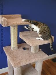 Free Diy Cat Tree Plans by Cat Tree Designs Pics Photos Home Cat Tree House Design