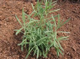 tips for creating an herb garden diy