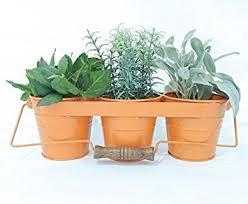 window herb harden amazon com indoor window herb garden orange garden outdoor