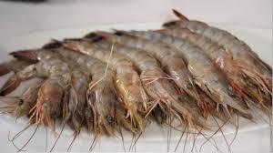 casamar seafood market u2013 casamar seafood market from our