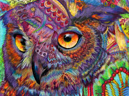original art drawing 16x20 owl concentration colorful owl