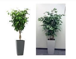 office ideas astonishing office artificial plants design