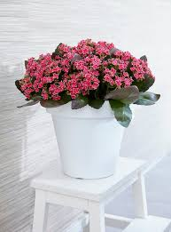 Small Indoor Plants That Flower
