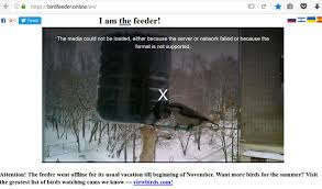 a bird feeder in russia live webcam winter only page 23