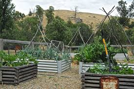 Wood For Raised Vegetable Garden by Wood For Raised Beds Landscape Traditional With Box Corn Garden