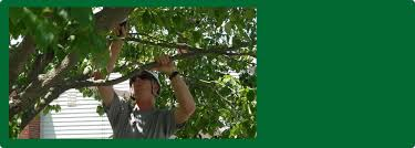 tree services sylvania oh total package landscape services inc