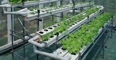 Urban Garden Supply - urban garden supply happy valley or 97086 yp com