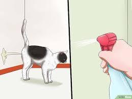 hukum memandulkan kucing cara menangani kucing betina yang mengalami berahi wikihow