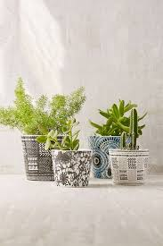 small planter 20 pretty pots to refresh your succulents
