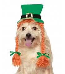 st patrick u0027s day dog costumes festive st patrick u0027s day dog
