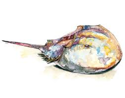 horseshoe crab print from original watercolor painting