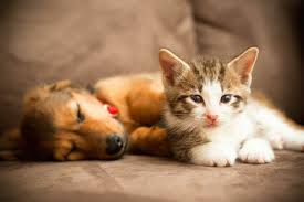 what pets in animal shelters wish you knew reader u0027s digest