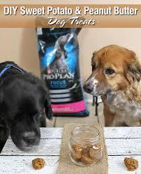 dog peanut butter diy sweet potato peanut butter dog treats