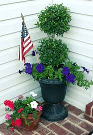 Topiary Balls With Flowers - best 25 eugenia topiary ideas on pinterest topiary trees