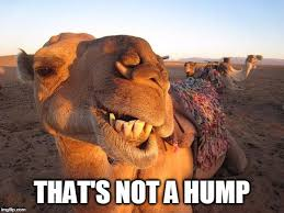 Hump Day Camel Meme - earl the camel pontificates on why they call it hump day imgflip