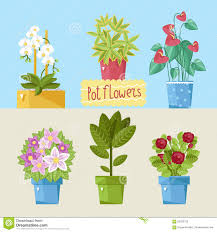 beautiful house plants illustration 59032723 megapixl