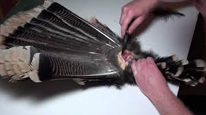 how to make turkey feathers how to mount a turkey fan and beard 1 of 3