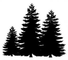 fun facts about christmas trees termite inspection orange county
