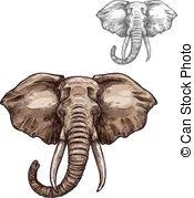 vector illustration elephant coloring book big animal