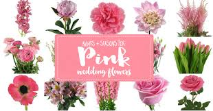 wedding flowers names the essential pink wedding flowers guide types of pink flowers