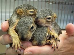 Arkansas wild animals images Volunteer in animal care wildcare jpg