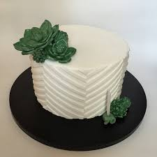 simple succulents white on white cake cakecentral com