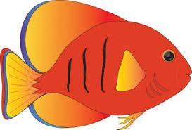 picture fish clipart clipartxtras