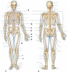 corn kernel anatomy image collections learn human anatomy image