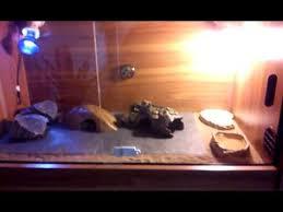 leopard gecko lighting at night leopard gecko vivarium setup youtube