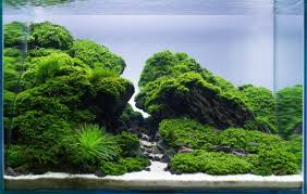 Green Machine Aquascape 100 Japanese Aquascape Everything About Aquascaping The