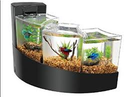 fish tank best images collections hd for gadget windows mac android
