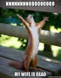 Dead Squirrel Meme - nnnnnnnnooooooooo my wife is dead happy squirrel make a meme