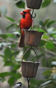 214 best cardinals images on pinterest cardinals northern