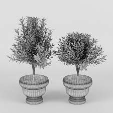 olive tree with fruits 3d model cgtrader